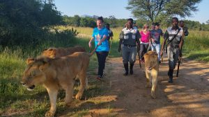 Walking with Lions at the Ranch
